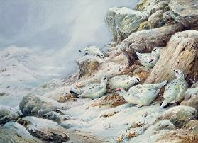 Ptarmigan in snow covered landscape