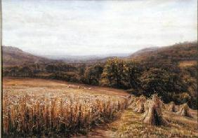 Harvest Time near Ashburton 1884  and