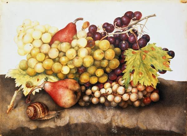 Still life with grapes.