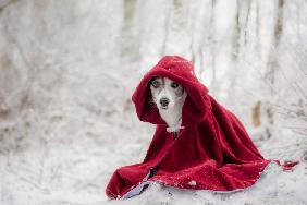 Little Red Riding Hood in Winter
