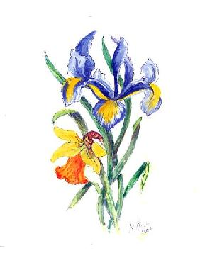 Blue Iris and Daffodil, 2002 (w/c on paper)
