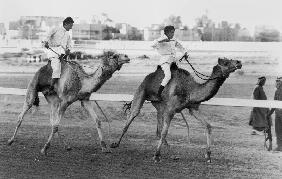 Camel race in Saudi Arabia in honour of Queen Elizabeth II's visit to to the Middle East 1979