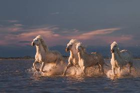 Angels of Camargue II