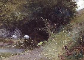 Swans on a Lake 1889  and