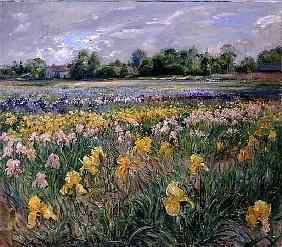 Cottages and Iris Field (oil on canvas)
