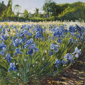 Above the Blue Irises