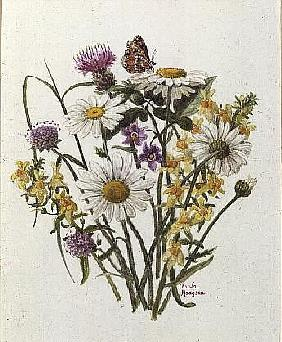 Knapweed, Ox-eye Daisy and Toad Flax (w/c on paper)