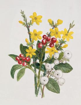 Snowberries, Dogwood and Jasmine