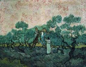 The Olive Pickers, Saint-Remy 1889